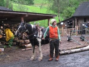 horse logging at CAT