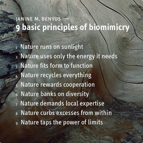 biomimicry