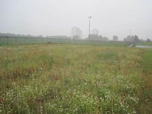 View of the site we have been offered to buld the community forest garden
