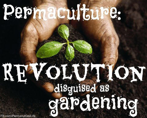permaculture-revolution
