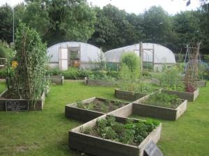 community_garden2