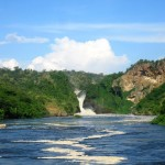 Murchison falls, where the mighty Nile river is forced through a narrow gap