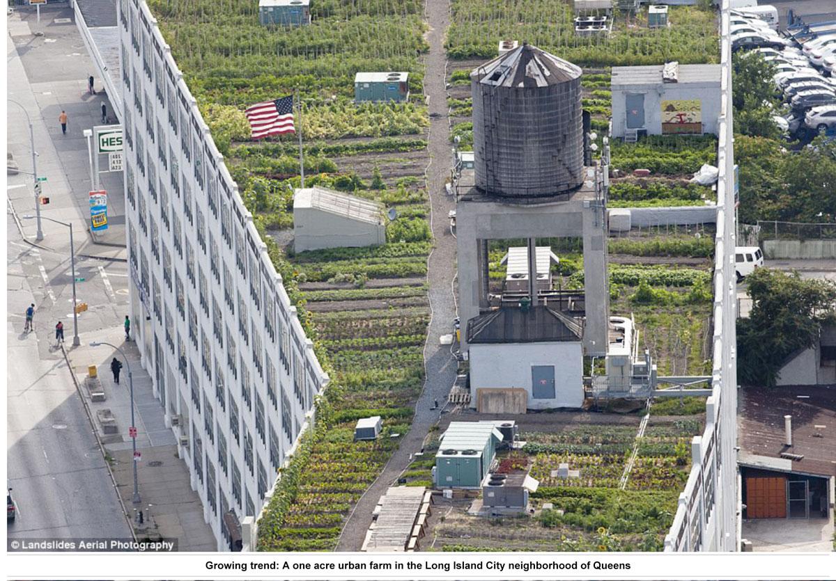 1-accre-urban-farm,-long-islanf-city.jpg