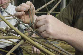 tying willows