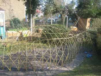 willow whale